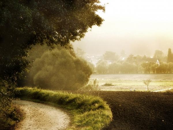 luz relajacion arbol horizonte romantico campo