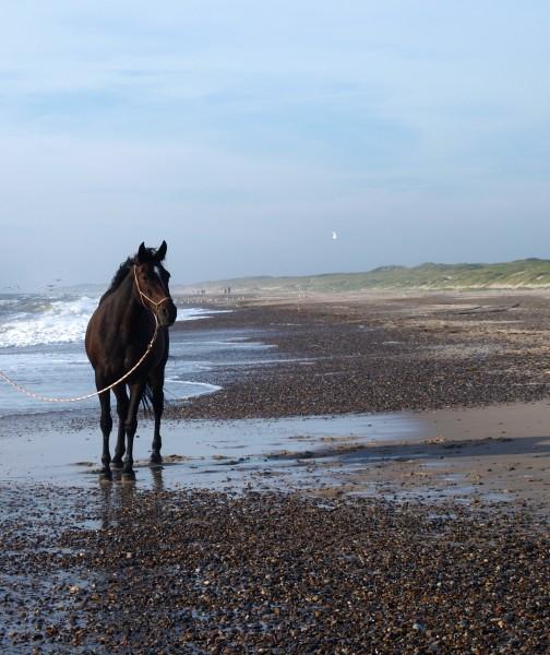marron boca caballo semental yegua equitacion