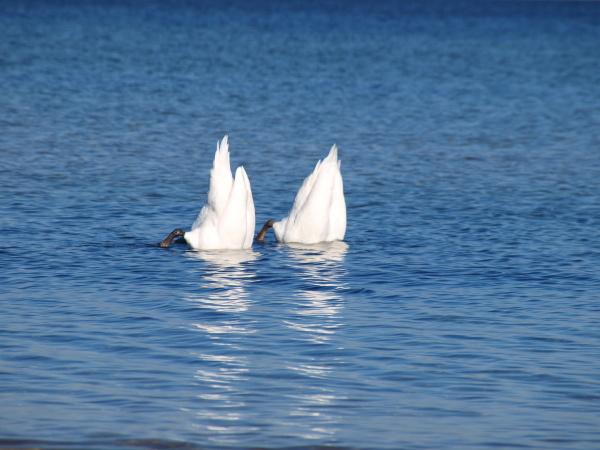 de agua mar del norte de