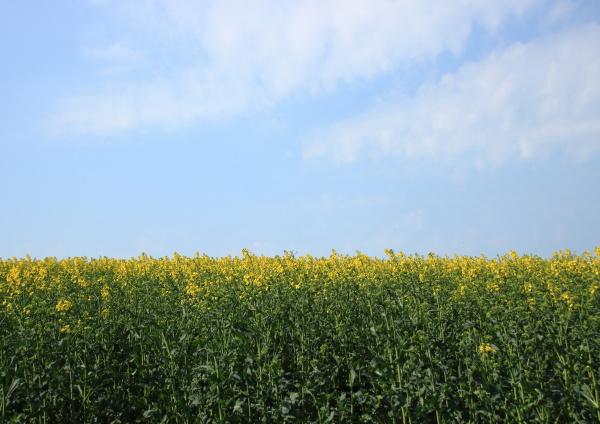 azul agricultura nube fondo