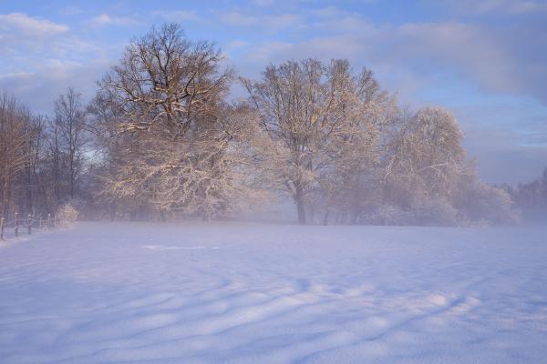 liberado color arbol arboles invierno nube