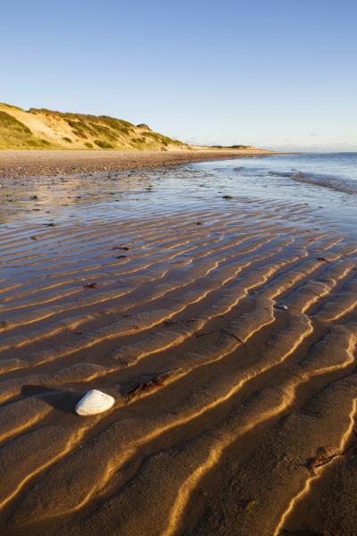 concha de almeja en la playa