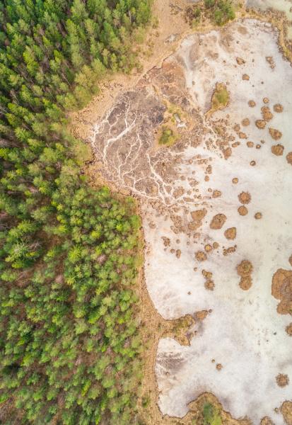 vista aerea del bosque que rodea