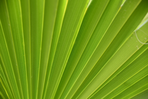 palm, leaves, in, the, province, of - 28217554