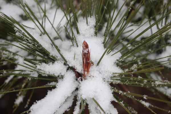 nieve en las hojas de la
