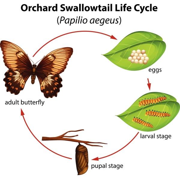 ciclo de vida de la cola