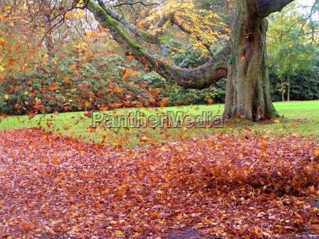 bailando hojas en el viento 2