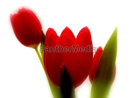 naturaleza muerta luz opcional flor planta