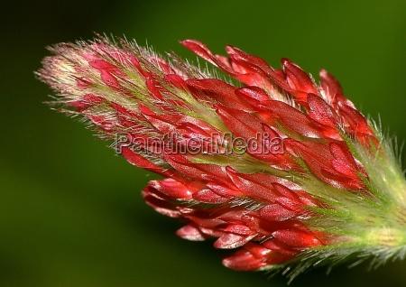 luz primer plano detalle flor planta