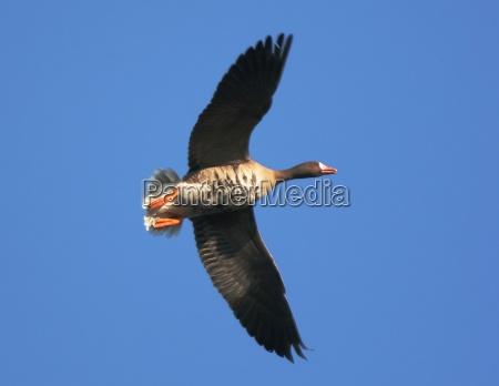 volar vuelo pajaro los animales aves