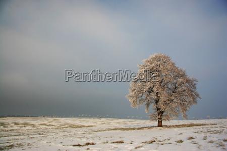 arbol arboles invierno frio campo caucasico