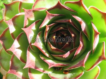 jardim planta verde seca cama espinhoso