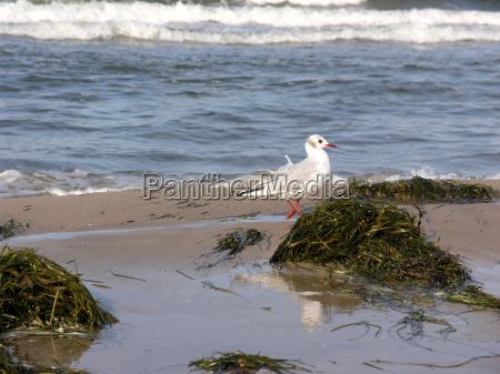 gull on binz beach ruegen