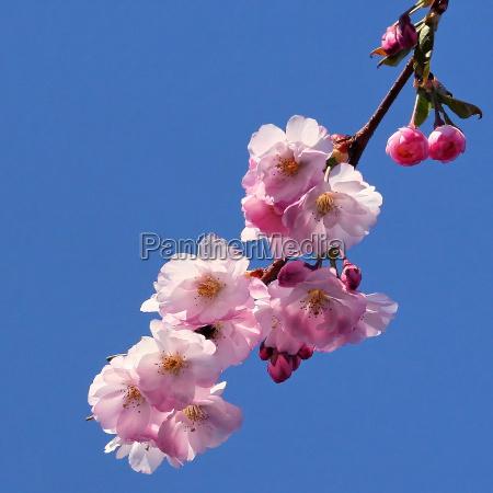 arbol flores primavera rama contrastes color