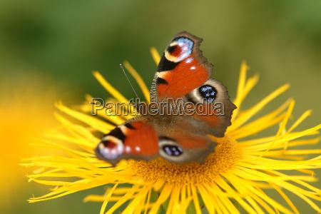 azul hermoso bueno existir insecto flor