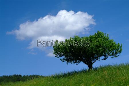 arbol con el cielo 2
