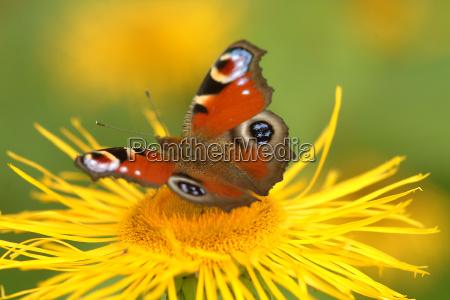 mariposa en la flor 9