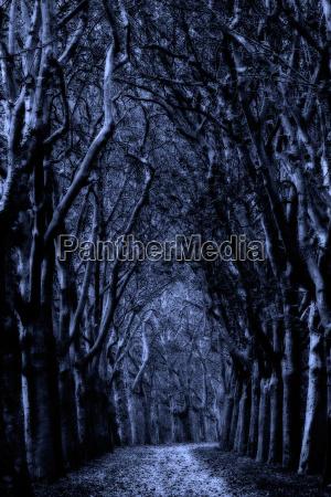 mystic avenue