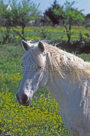 caballo los animales caballos el sur