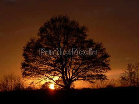trae traeer solnedgang mark landskab natur