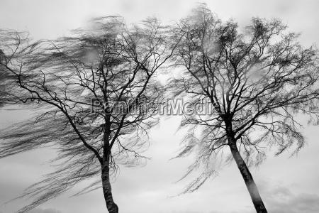 el viento y la lluvia