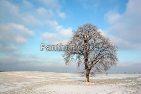 arbol arboles invierno frio campo nieve