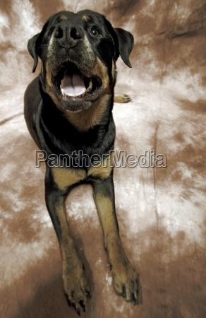 dama boca dientes retrato de un