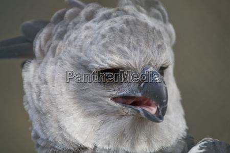 pajaro lengua cara retrato aves greifvogel