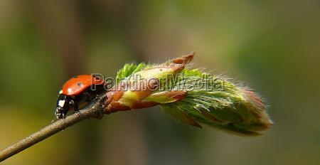 primer plano insecto verde hojas escarabajo