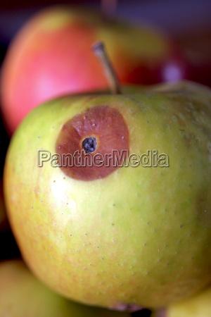 vitamina vitaminas verde marron maduro frutas