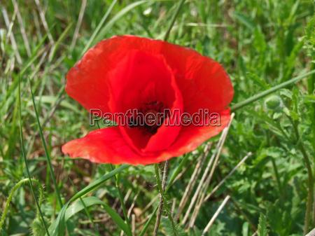 primer plano planta flor verde campo