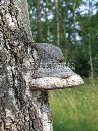 arbol madera tronco conservacion de la