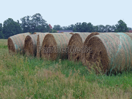 esperar espera agricola agricultura campo verano