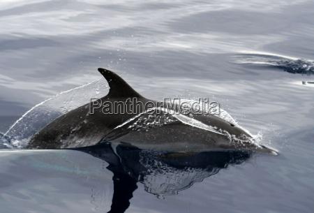 la observacion de ballenas