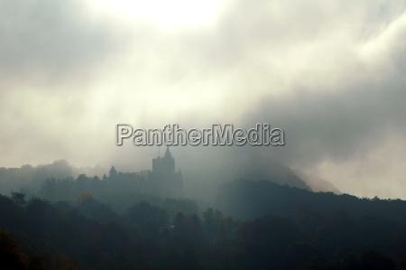 arbol arboles niebla neblina otonyal de