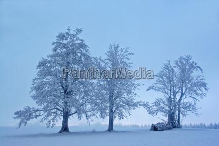 luz arbol arboles invierno frio niebla