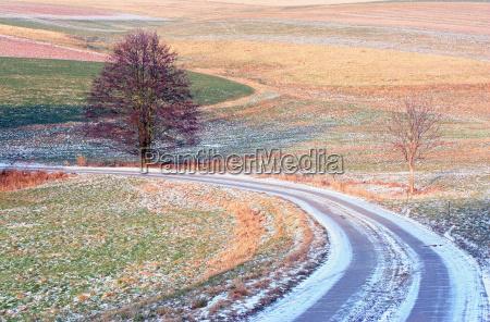 arbol arboles invierno flor camino de