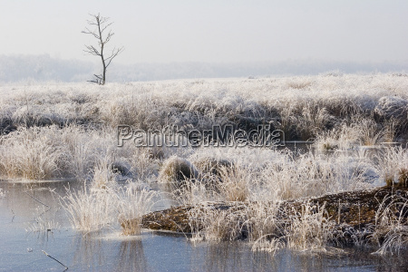 moor in the first frost