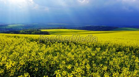 luz campo primavera paisaje naturaleza las