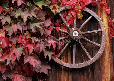 rueda color rebstock colores otonyo