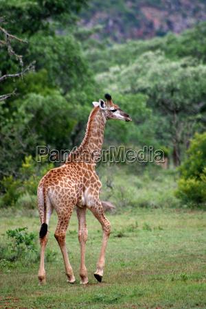 animal africa safari animal bebe bebe