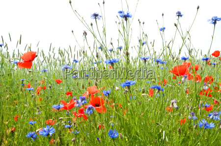 prado del verano 1