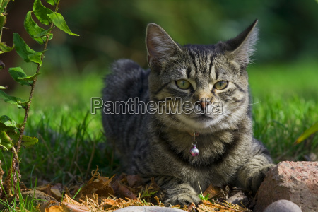 mascotas retrato ojos collar gato ver