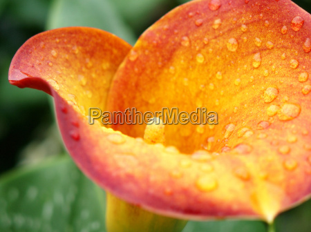 flor planta taza schnittblume floristica