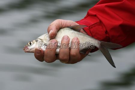 la suerte del pescador
