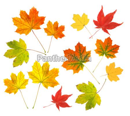 arbol hojas colorido pagina naturaleza otonyo