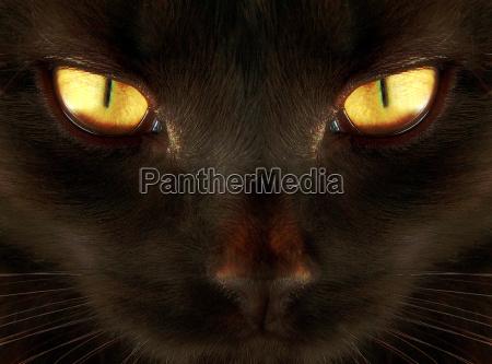 animal ojos ojos de gato cartel