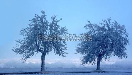 arbol invierno campo hielo nieve naturaleza