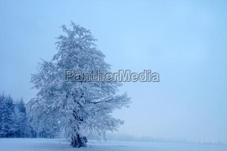 paisaje mistico del invierno