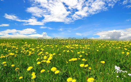 nubes paisajes prado
